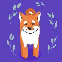 Sorridere felice variopinto sveglio del cane di inu di shiba isolato sulla vista laterale del fondo bianco