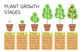 Fasi di crescita delle piante infografica colorato. Icone di arte di linea. Modello di istruzione di impianto. Illustrazione di stile lineare isolato su bianco. Piantare frutta, processo di verdure.