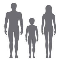 Illustrazione vettoriale di uomo, donna e bambino. Proporzioni del corpo di sagome umane vista frontale.