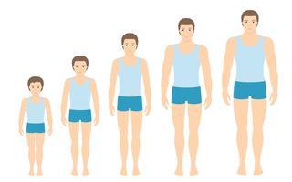 Le proporzioni del corpo dell'uomo cambiano con l'età. Fasi di crescita del corpo del ragazzo. Illustrazione vettoriale Concetto di invecchiamento Illustrazione con l'età dell'uomo diverso dal bambino all'adulto. Stile piatto maschile