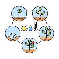 Infographics di fasi di crescita delle piante. Icone di arte di linea. Modello di istruzione di impianto. Illustrazione di stile lineare isolato su bianco. Piantare frutta, processo di verdure. Stile di design piatto. vettore