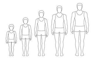 Le proporzioni del corpo dell'uomo cambiano con l'età. Fasi di crescita del corpo del ragazzo. Illustrazione di contorno vettoriale Concetto di invecchiamento Illustrazione con l'età dell'uomo diverso dal bambino all'adulto. Stile piat