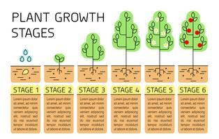 Infographics di fasi di crescita dell'albero. Icone di arte di linea. Modello di istruzione di impianto. Illustrazione di stile lineare isolato su bianco. Piantare i frutti. Stile di design piatto. vettore