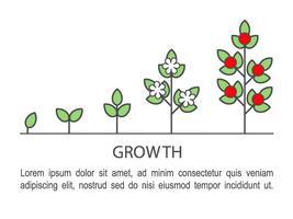 Infographics di processo di crescita delle piante. Icone di concetto di crescita linea arte. vettore
