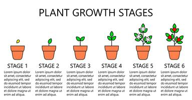 Infographics di fasi di crescita delle piante. Icone di arte di linea. Modello di istruzione di impianto. Illustrazione di stile lineare isolato su bianco. Piantare frutta, processo di verdure. Stile di design piatto.