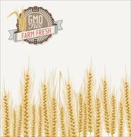 Sfondo di campo di grano vettore