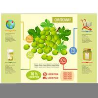 vettore infografica chardonnay