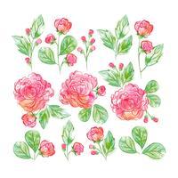 Acquerello Floral Set vettore