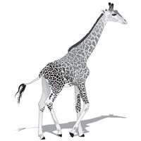 Giraffa africana BW vettore