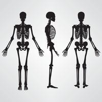 Illustrazione di scheletro umana di vettore di colore nero della siluetta