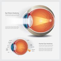 Anatomia dell'occhio umano ed illustrazione normale di vettore della lente