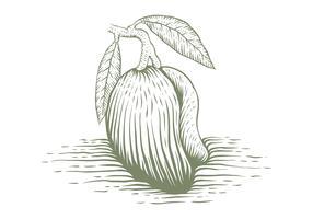illustrazione disegnata a mano di vettore del mango