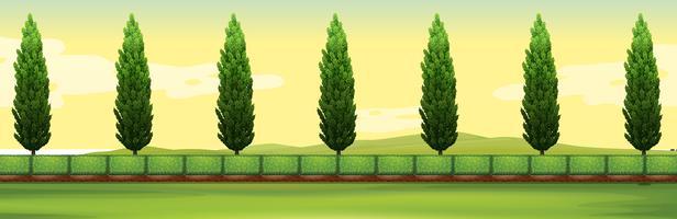 Scena con alberi di pino nel parco vettore