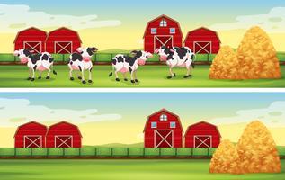 Scene di fattoria con mucche e fienili