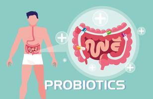 corpo umano con probiotici e apparato digerente