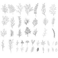 Insieme di foglie e rami vettore