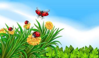 Scena con coccinelle che volano nel giardino