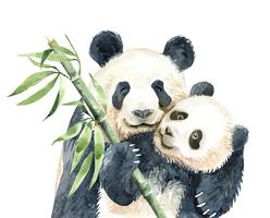 Acquerello Mamma e Baby Panda con bambù.