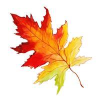 Bella foglia d'autunno ad acquerello vettore