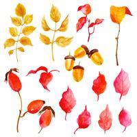 Bella collezione di foglie di autunno dell'acquerello vettore