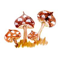Funghi Ad Acquerello