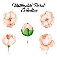 Collezione floreale dell'acquerello vettore