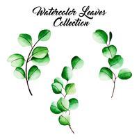 Collezione di foglie di acquerello vettore