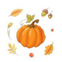 Zucca e foglie disegnate a mano. vettore