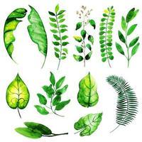 Collezione di elementi di foglie d'estate vettore