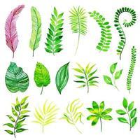 Collezione di elementi di foglie di estate dell'acquerello vettore
