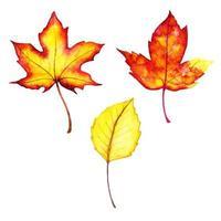 Collezione di foglie autunnali rosse e gialle