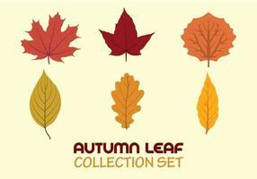 Collezione di foglie autunnali