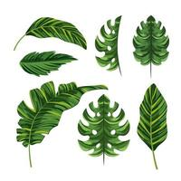 impostare foglie esotiche di palme tropicali vettore