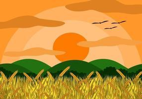 Campo di riso con chicchi di riso vettore