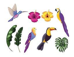 impostare uccelli esotici con foglie naturali vettore