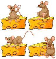 Quattro pose di topo e set di formaggi vettore