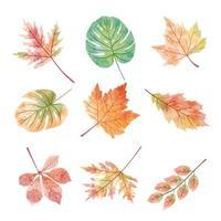 Insieme del vettore dell'acquerello di varie foglie nella stagione autunnale.