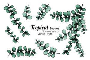 insieme di foglie tropicali verde pallido vettore
