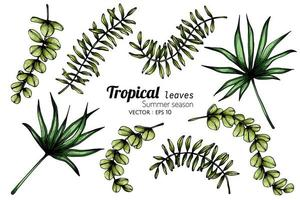 insieme di vari tipi di foglie tropicali