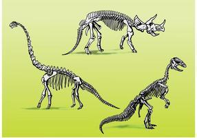 Scheletri di ossa di dinosauro vettore