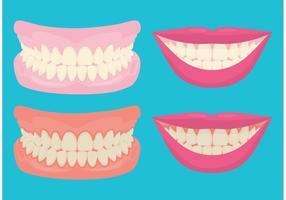 Denti e gengive sorridenti vettore