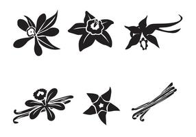 Vettore di fiori di vaniglia