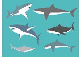vettore grandi squali bianchi