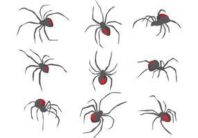 Vettori di ragno vedova nera