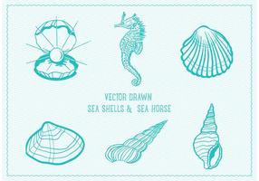 Conchiglie di mare disegnate vettore