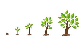 set di crescita di piante o alberi vettore