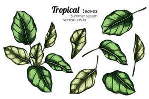 insieme dell'illustrazione botanica delle foglie tropicali vettore