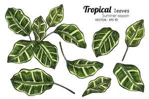 illustrazione disegnata a mano di foglie tropicali vettore