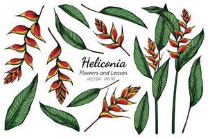 insieme dell'illustrazione del fiore di heliconia