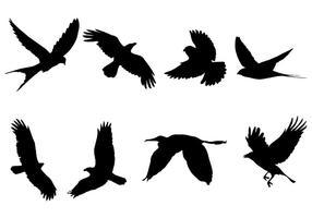 Vettore della siluetta dell'uccello di volo